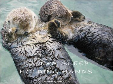 inspirational pictures,sea-otters-sleep-holding-hands-quote-65,motivational pictures