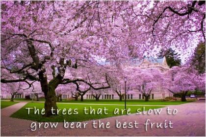 inspirational pictures,the-trees-that-are-slow-to-grow-bear-the-best-fruit-quote-53,motivational pictures