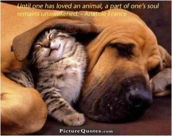 inspirational pictures,until-one-has-loved-an-animal-a-part-of-ones-soul-remains-unawakened-quote-52,motivational pictures